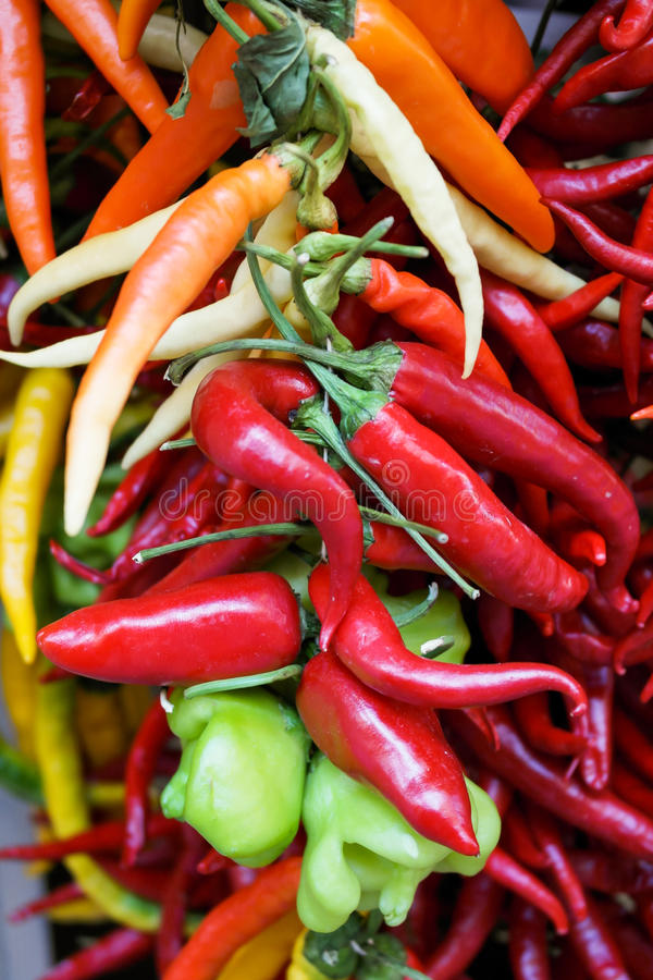 Peppers hanging stock photography