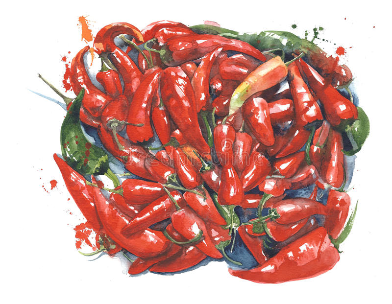 Peppers hot peppers chili cuban jalapeno watercolor painting illustration isolated on white background royalty free illustration