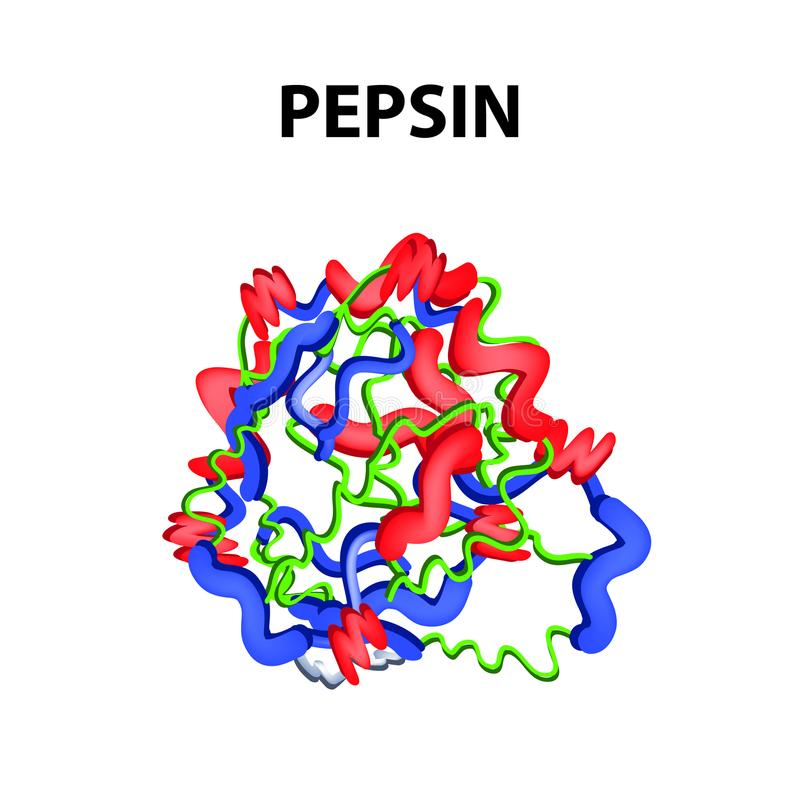 Pepsin is a molecular chemical formula. Enzyme of the stomach. Infographics. Vector illustration on an isolated background. Pepsin is a molecular chemical stock illustration
