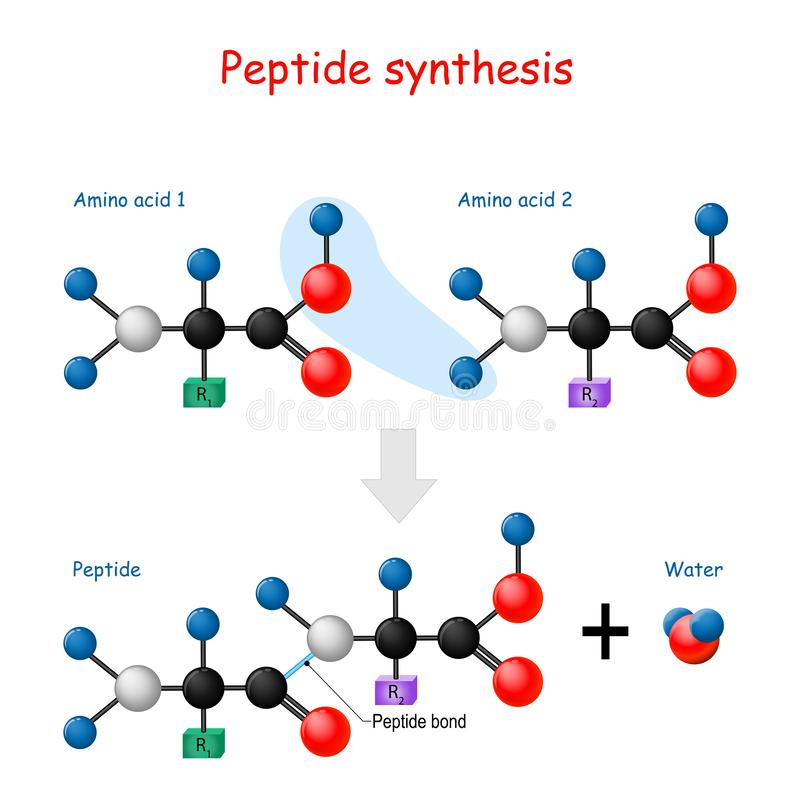 Free Peptide Synthesis Royalty Free Stock Images - 166564509
