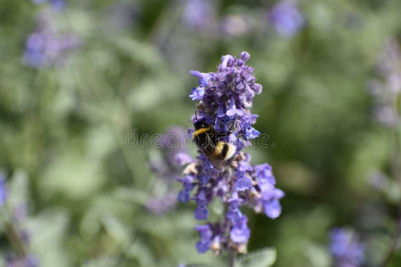 pequeña abeja hermosa en el mundo grande imágenes de archivo libres de regalías