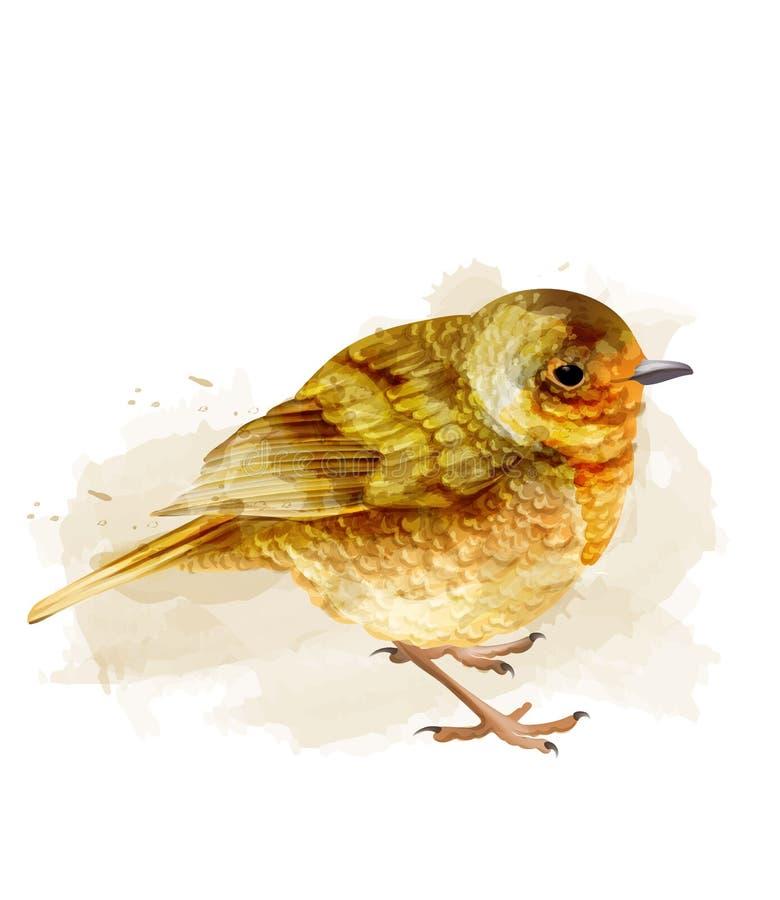 Pequeña acuarela del vector del gorrión pájaro lindo aislado en los ejemplos blancos libre illustration