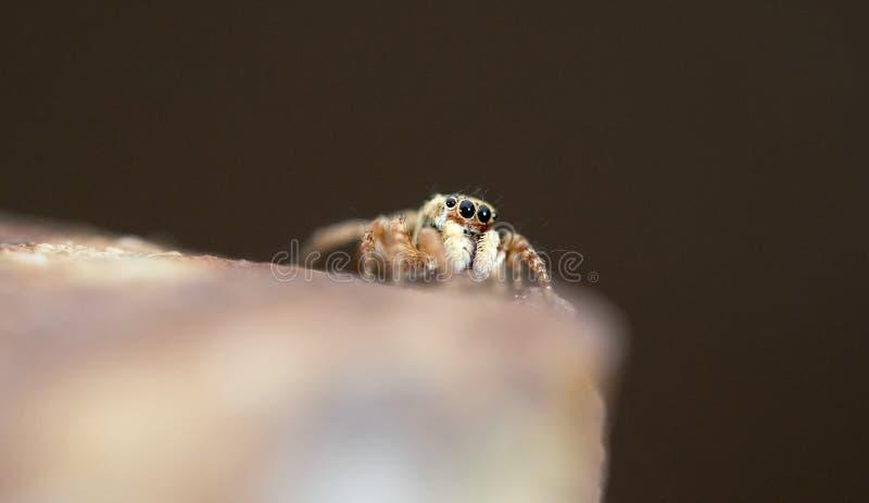 Pequeña araña hermosa foto de archivo