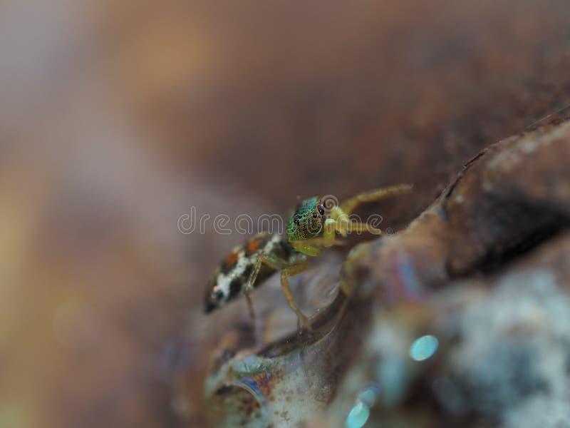 Pequeña araña hermosa fotografía de archivo
