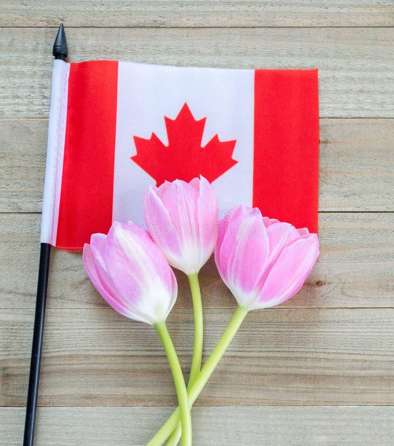 Pequeña bandera canadiense con los tulipanes rosados en un fondo de madera fotos de archivo libres de regalías