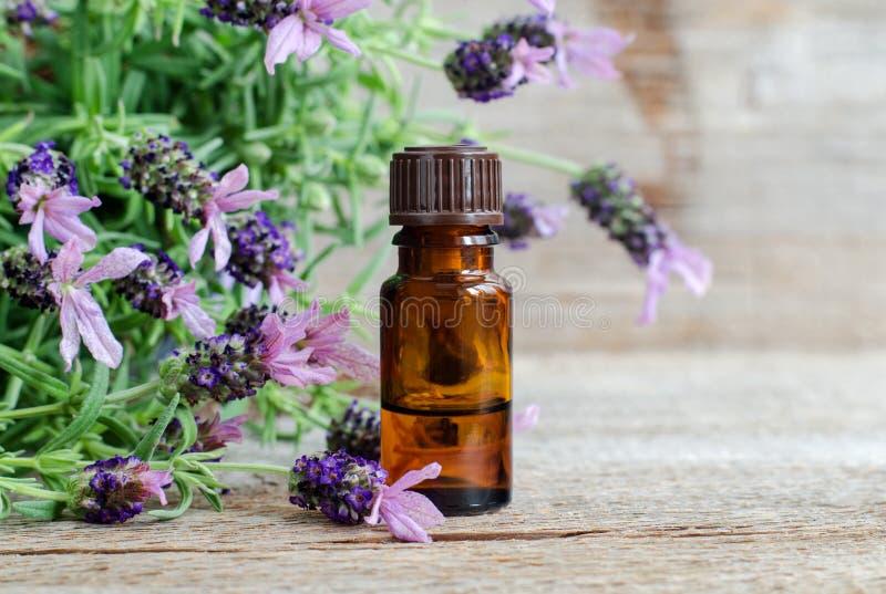 Pequeña botella con aceite de lavanda esencial las flores del lavandula se cierran para arriba Ingredientes del Aromatherapy, del imagen de archivo