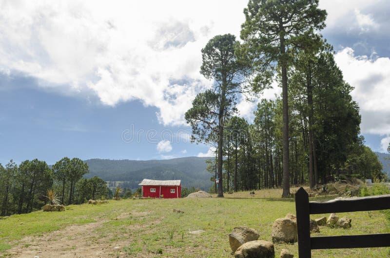 Pequeña cabina roja en el bosque foto de archivo