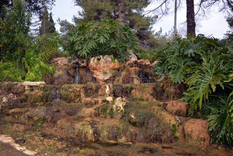 Pequeña cascada caminada hermosa en las zonas tropicales en Israel fotografía de archivo libre de regalías