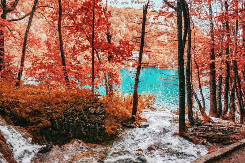 Pequeña cascada de uno de los lagos más asombrosos del otoño, Croacia Plitvice Un pedazo verdaderamente virginal y maravilloso de fotografía de archivo