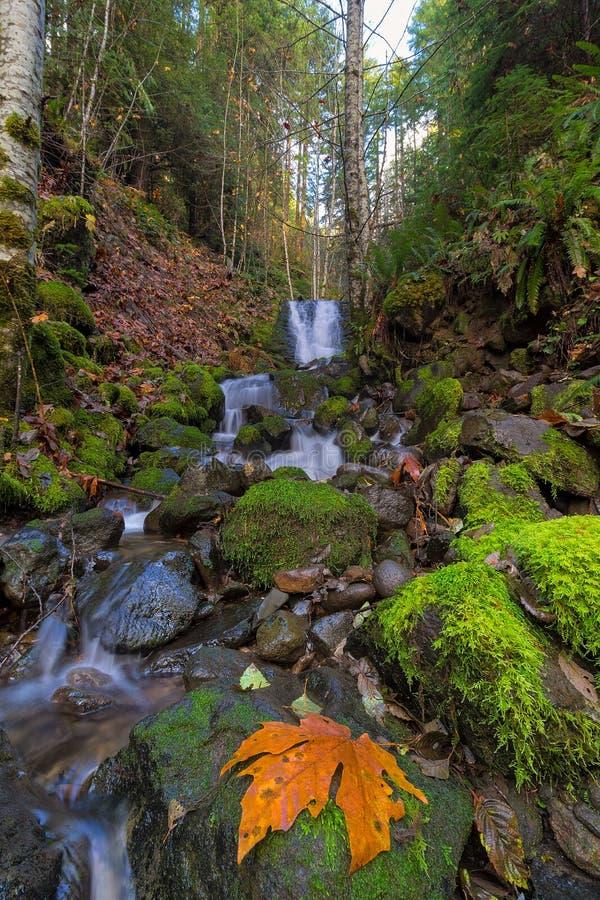 Pequeña cascada en Lewis River Falls más bajo en el estado de Washington imágenes de archivo libres de regalías