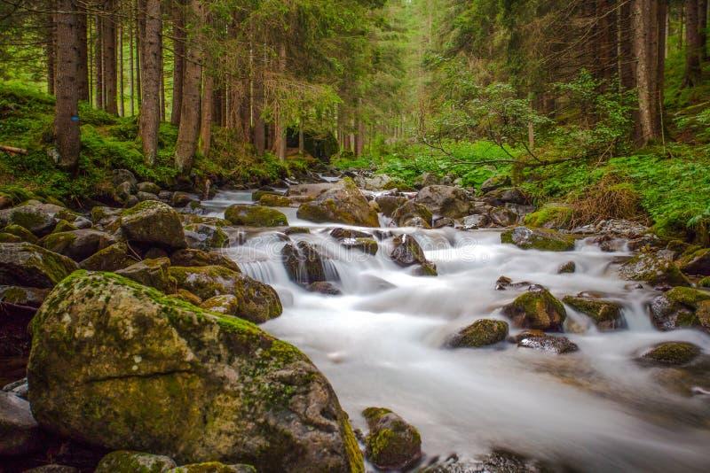 Pequeña cascada en un río del bosque con agua sedosa alrededor de las rocas en la corriente Exposición larga imágenes de archivo libres de regalías