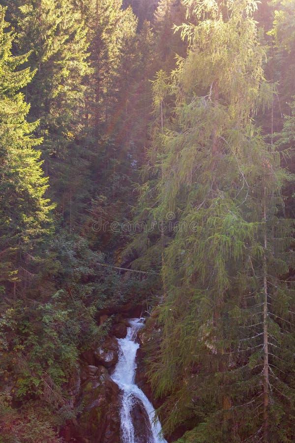 Pequeña cascada entre un bosque del abeto iluminado por los rayos del sol imagen de archivo libre de regalías