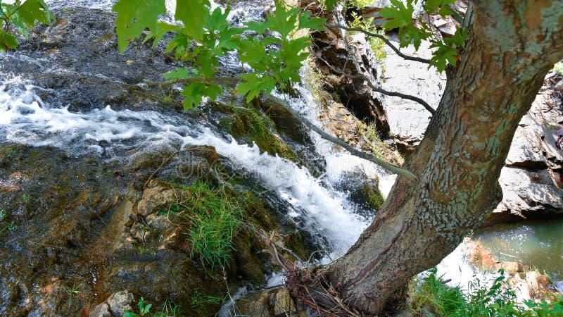 Pequeña cascada tirada desde arriba cerca de raíces de un árbol imagen de archivo libre de regalías