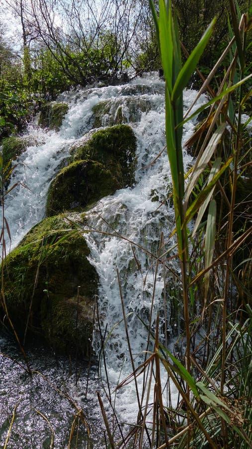 Pequeña cascada a través de las cañas, Plitvice, Croacia imagenes de archivo