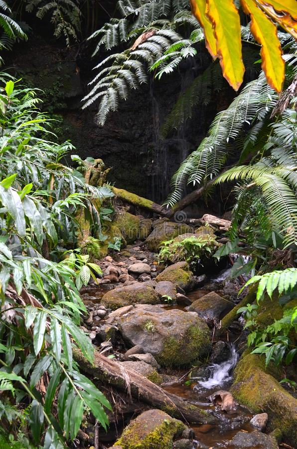 Pequeña cascada tropical fotografía de archivo libre de regalías