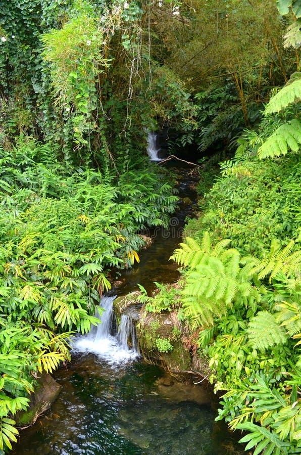 Pequeña cascada tropical fotos de archivo libres de regalías
