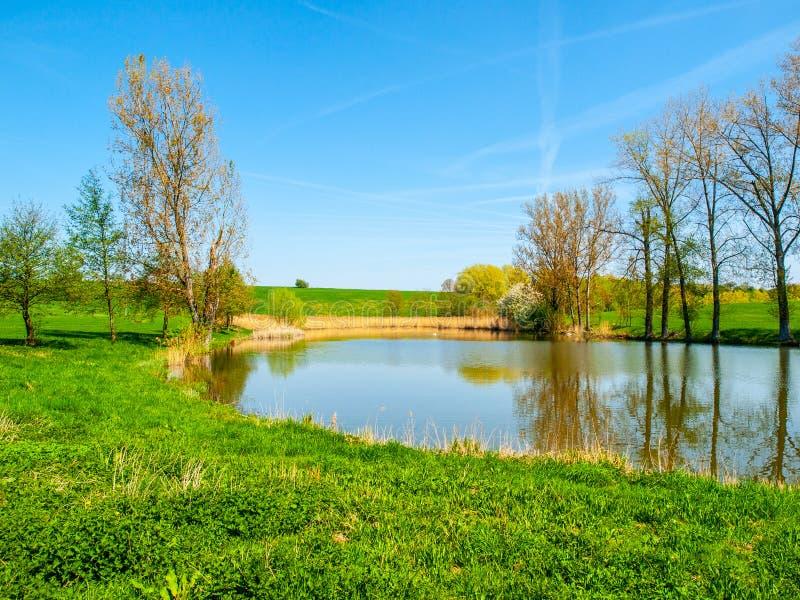 Pequeña charca con la fila de árboles en el medio del paisaje rural verde en día de verano soleado imagen de archivo