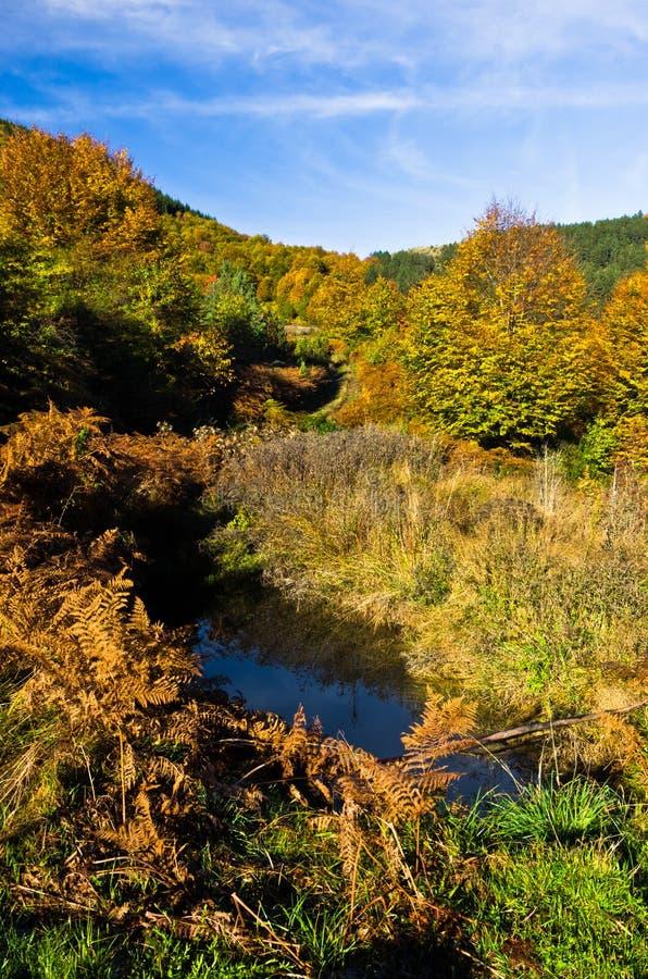 Pequeña charca en la escena colorida del otoño con el bosque en Rolling Hills de la montaña de Zeljin foto de archivo libre de regalías