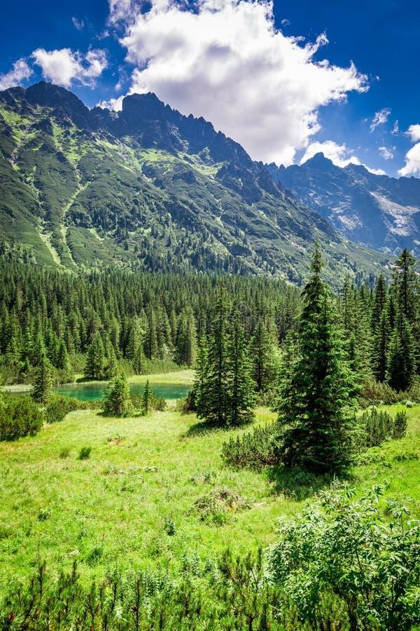 Pequeña charca maravillosa en el Tatras en el amanecer en verano fotografía de archivo libre de regalías