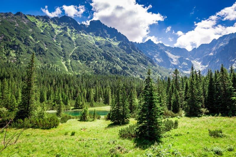 Pequeña charca maravillosa en el Tatras en verano, Polonia fotografía de archivo libre de regalías