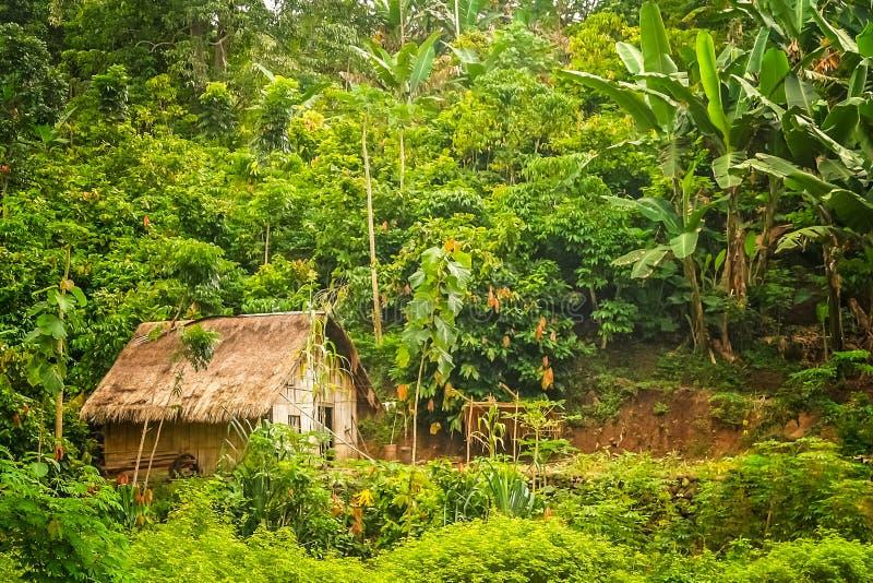 Pequeña choza en la selva imágenes de archivo libres de regalías