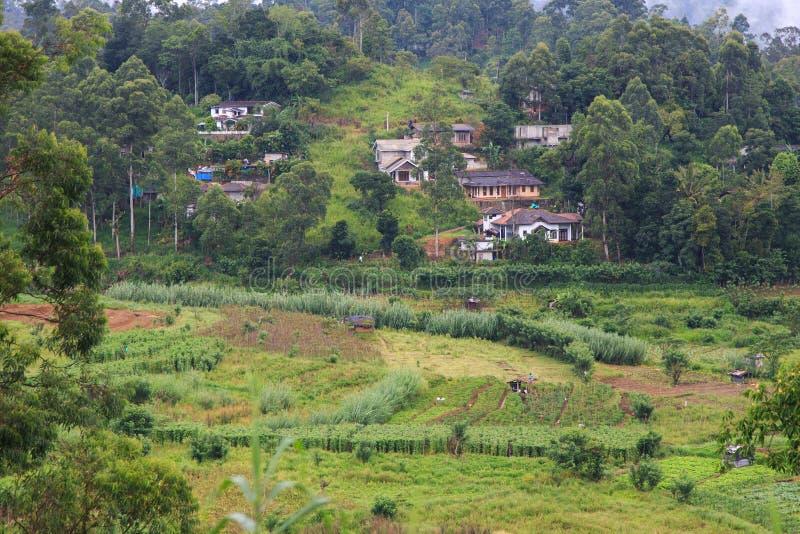 Pequeña ciudad argriculural en el Kandy al viaje de tren de Ella - Sri Lanka foto de archivo