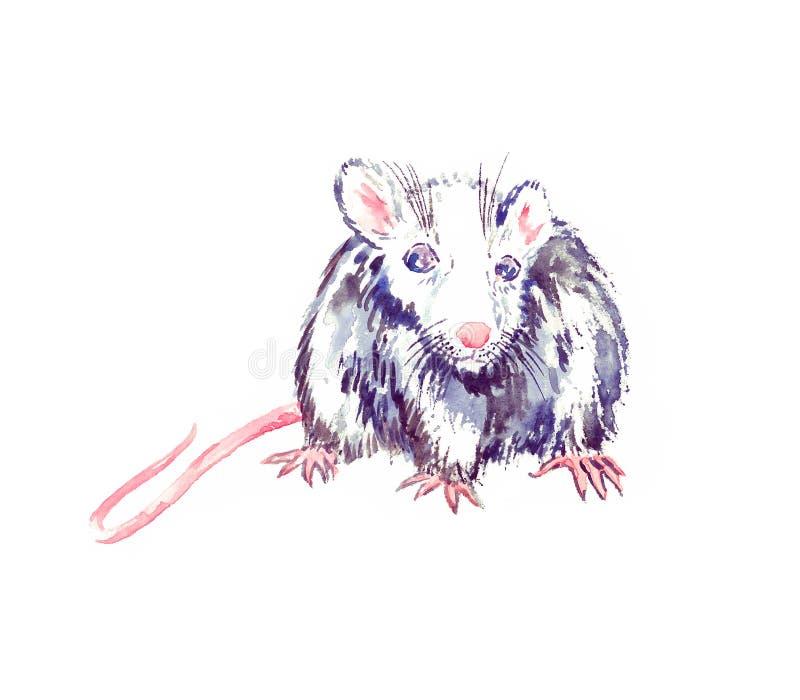 Pequeña colocación observada azul blanco-gris divertida de la rata y el parecer recto, pintura de la acuarela Aislado en el ejemp stock de ilustración