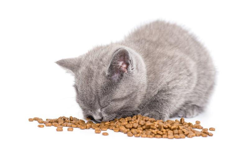 Pequeña consumición británica adorable del gatito fotos de archivo libres de regalías