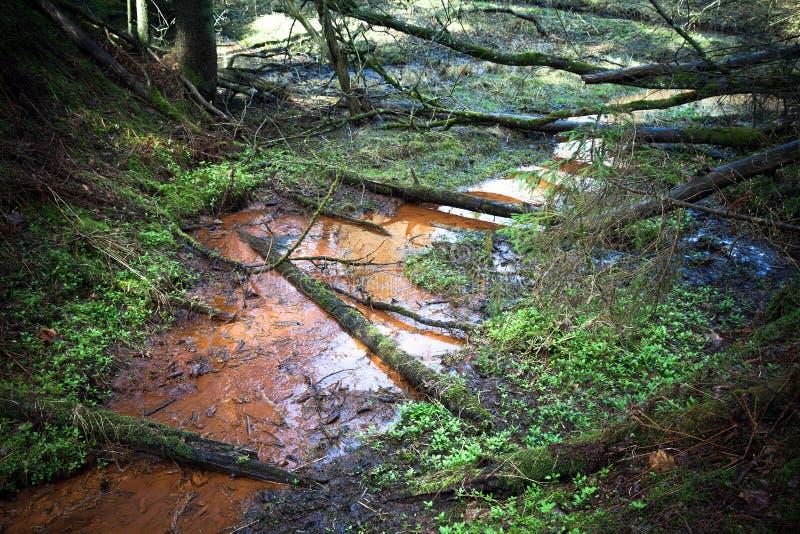 Pequeña corriente con agua rojo oscuro en bosque imágenes de archivo libres de regalías
