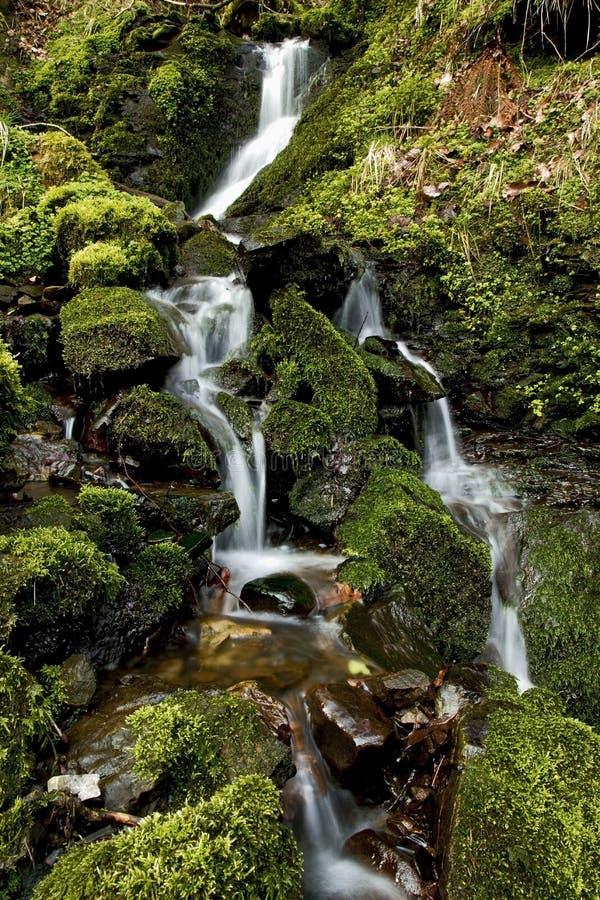 Pequeña corriente del agua que cae sobre musgo y rocas imagen de archivo libre de regalías
