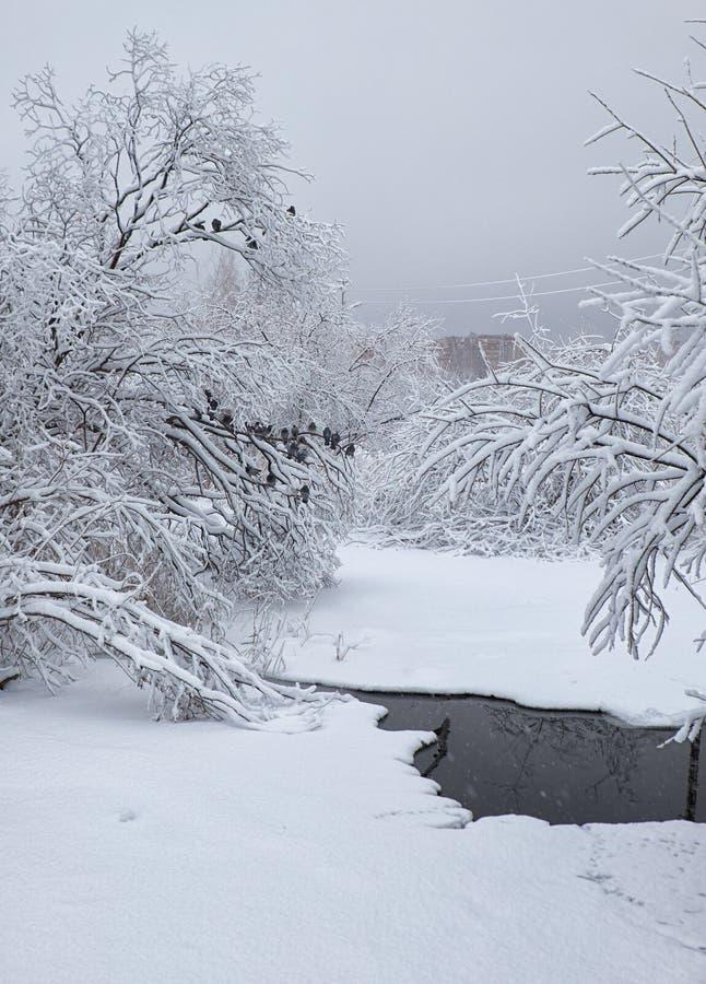 Pequeña corriente del invierno debajo de árboles sitiados por la nieve debajo de la nieve en invierno imagenes de archivo