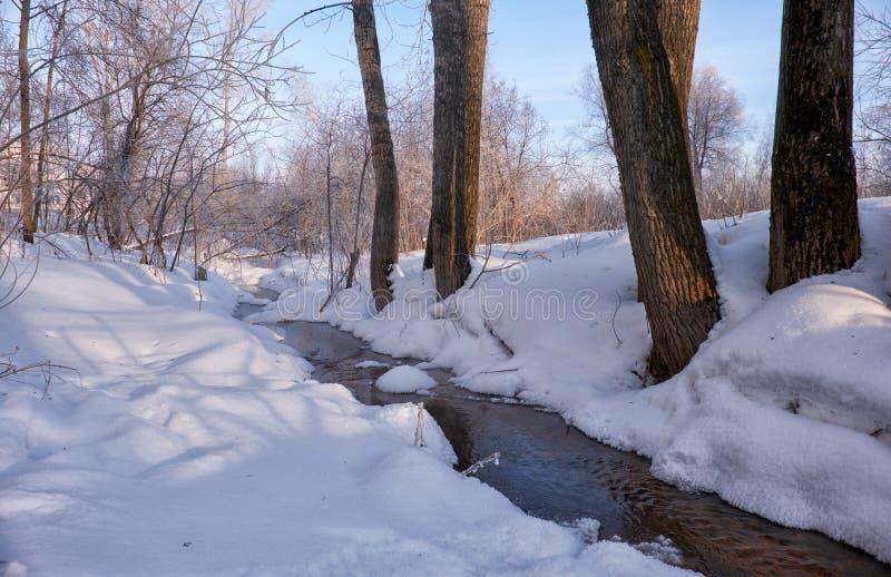 Pequeña corriente del invierno entre árboles de álamo debajo de la nieve en invierno imagen de archivo