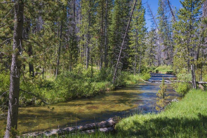Pequeña corriente en las montañas de Idaho imagen de archivo