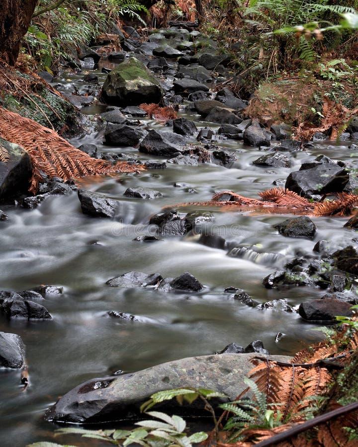 Pequeña corriente en un bosque en Nueva Zelanda imagen de archivo