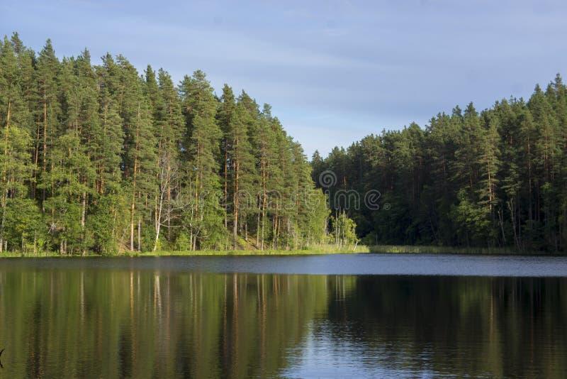 Pequeña corriente entre pinos Karelia, Rusia fotografía de archivo