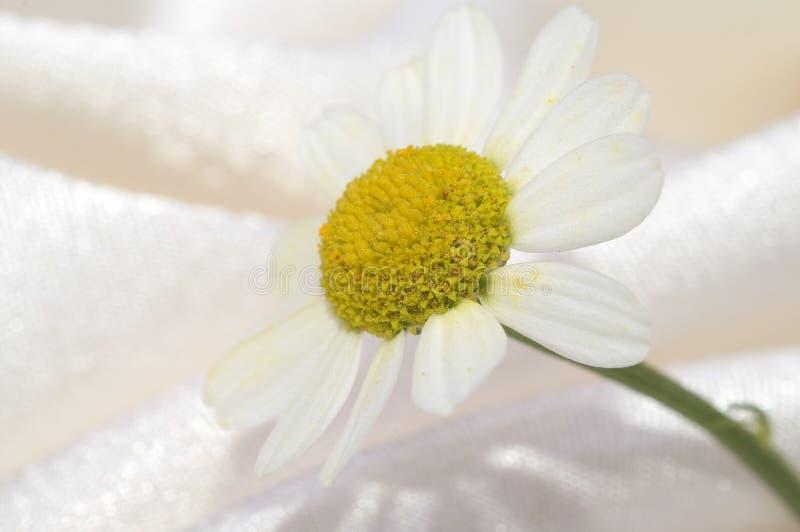 Pequeña flor fotografía de archivo libre de regalías
