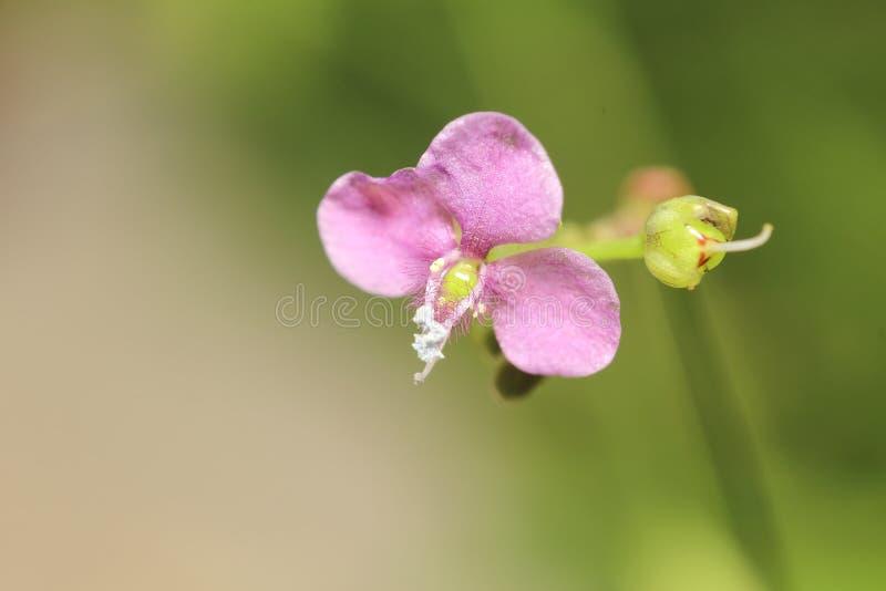 Pequeña flor fotografía de archivo