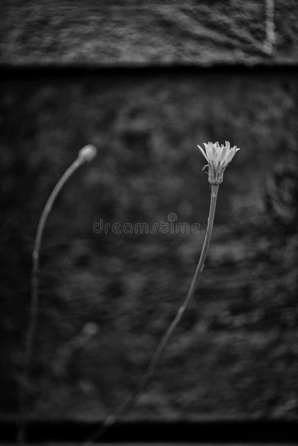 Pequeña flor fotos de archivo libres de regalías