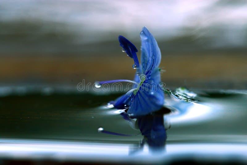 Pequeña flor azul imagenes de archivo