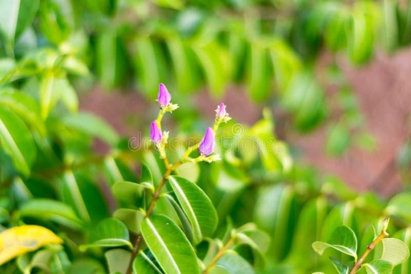 Pequeña flor de la planta tropical, Cayo Guillermo, Cuba imagenes de archivo