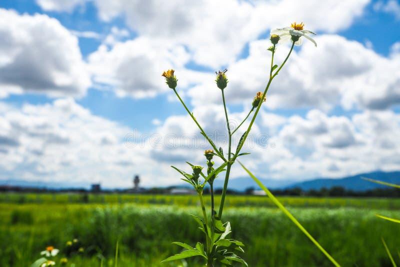 Pequeña flor en día soleado fotos de archivo