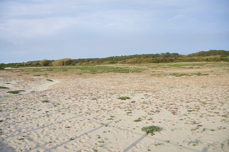 Pequeña flor rosada en la arena de las dunas fotografía de archivo libre de regalías