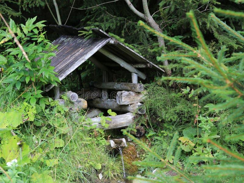 Pequeña fuente de agua en bosque verde fotografía de archivo libre de regalías