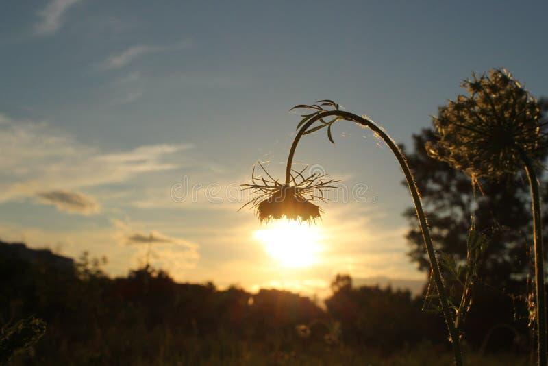 Pequeña lámpara de la flor apacible contra la perspectiva de fijar el sol imagen de archivo