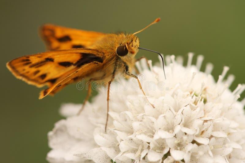 Pequeña mariposa imagenes de archivo