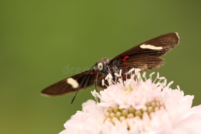 Pequeña mariposa fotos de archivo