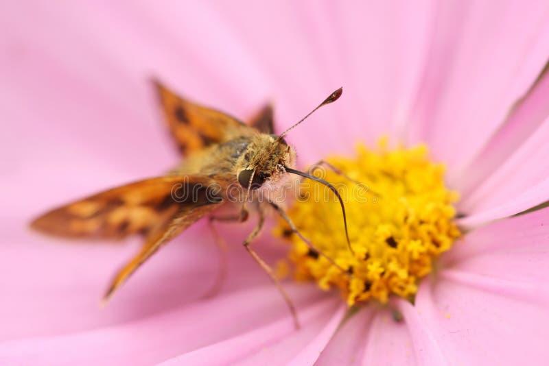 Pequeña mariposa imagen de archivo