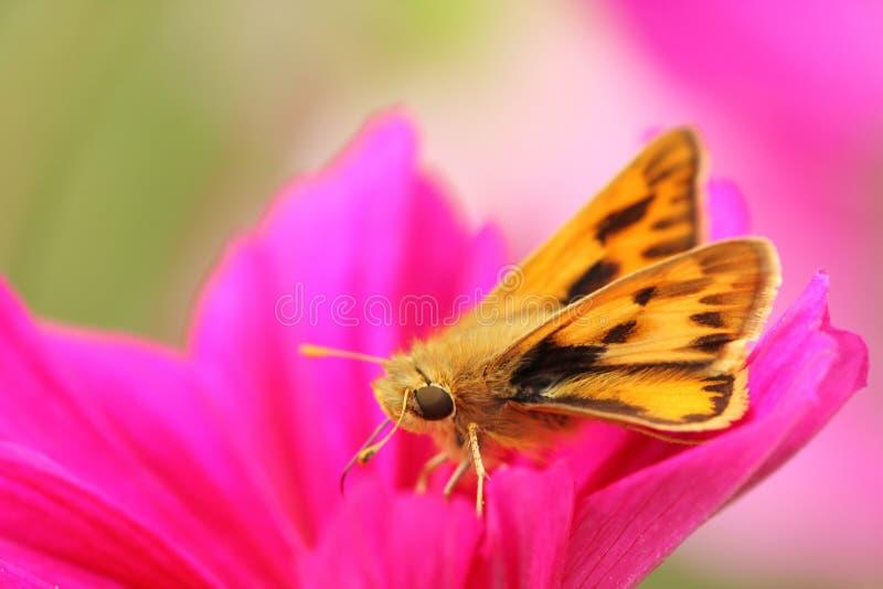 Pequeña mariposa imagen de archivo libre de regalías