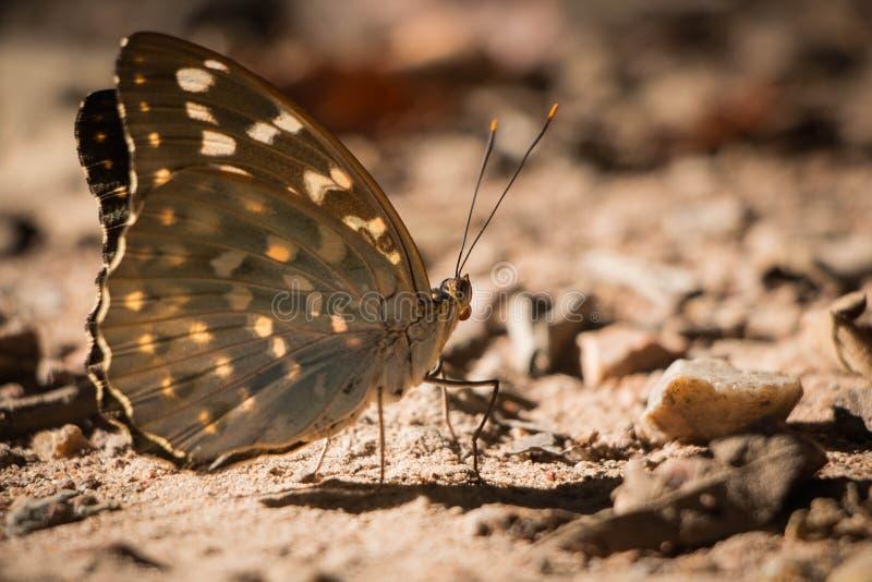 Pequeña mariposa fotos de archivo libres de regalías