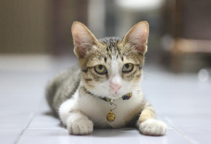 Pequeña mirada del gato alrededor foto de archivo